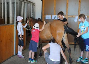 Med vikendi oz. po dogovoru organiziramo rojstnodnevne zabave s konji